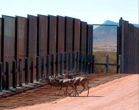 bmg border deer